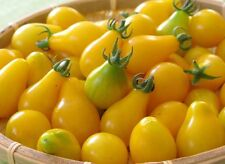 YELLOW PEAR TOMATO (VEGETABLE SEEDS)