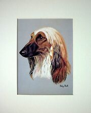 "REDUCED - AFGHAN HOUND DOG ART CARD PRINT MOUNTED 10 X 8"" - SALE"