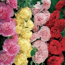 100Pcs Hollyhock Summer Carnival Mixed Flower Seeds For Home Garden View Decor