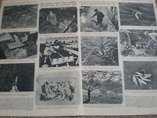 Photo article New Zealand trout hatchery Tongairo river 1954 (my ref O54)