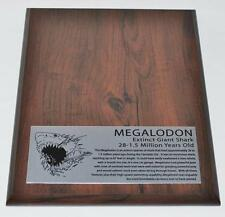MEGALODON TOOTH Display Stand for Fossil Shark Tooth -TOOTH NOT INCLUDED #250 2#