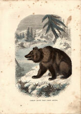 CASSELL'S MAMMALS - THE  COMMON BROWN BEAR - 150 YEARS OLD WOOD ENGRAVING