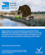 RSPB Pin Badge | Water Vole | Rainham Marshes reserve [00948]