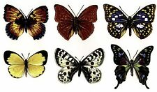 Large Butterfly Color Enamel Decals - works with any Coe Glass