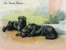 FLAT COATED RETRIEVER DOG GREETINGS NOTE CARD TWO BEAUTIFUL DOGS THE BLACK WATCH
