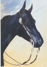 """Black Velvet - Original oil painting by Molinda Sunde' Parker - 24"""" X 36"""""""