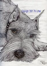 Dog Art,Pencil&Ink ,Schnauzer B&W Print#1 by PK Ufnal