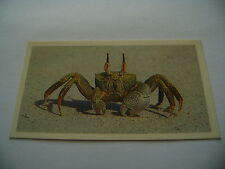 Grandee The Living Ocean Card No  6 Ghost Crab