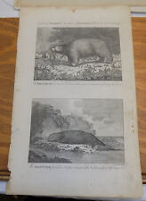 1785 Antique Print/ CAPTAIN COOK'S DISCOVERIES / WHITE BEAR & SEA OTTER/ AMERICA