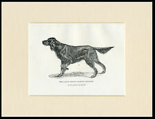 GORDON SETTER NAMED DOG RARE ANTIQUE 1900 DOG PRINT MOUNTED READY TO FRAME
