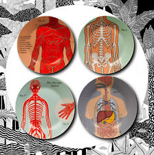 Set of 4 Anatomical Side Plates- Jay Anatomy Medical Vintage Organs Muscles NEW