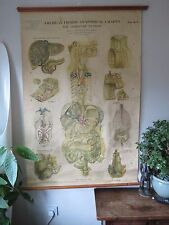 RARE VINTAGE ROLL PULL DOWN AMERICAN FROHSE ANATOMY CHART OF DIGESTIVE SYSTEM