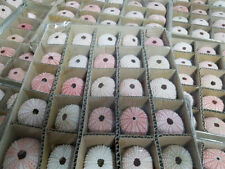 "Wholesale Dried Pink Sea Urchins (100 Sea Urchins, 1""-2""), Sea Urchin Bulk"