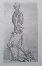 Vesalius DIE 14. FIGUR DER MENSCHLEIN Nachdruck Kupfertafel Anatomie print