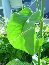 500 Virginia Tobacco seeds w/ FREE how to grow booklet!