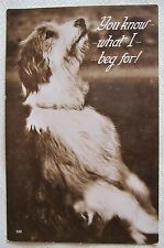 """DOG TERRIER DOG """"YOU KNOW WHAT I BEG FOR!"""" VINTAGE REAL PHOTO POSTCARD"""