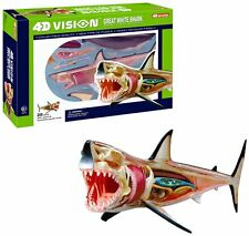 4D Vision Great White Shark Anatomy Model , New, Free Shipping