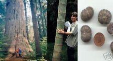 Für Liebhaber von Riesenbäumen: Gartenbaum-Sortiment