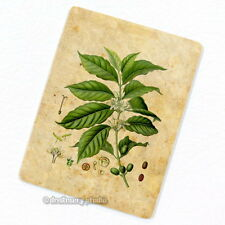 Coffee Plant & Beans Deco Magnet, Decorative Fridge Kitchen Decor Mini Gift