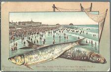 1906 Hotel Rudolf & Heinz Pier Atlantic City New Jersey Fish Border Postcard NJ