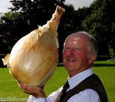 "Onion ""Kelsae"" Largest Onion In The World Guiness Record Holder 17 Lbs. 8.5 Oz."