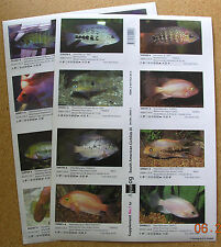 Supplements for AQUALOG, South American Cichlids III (Peel Back Stickers)