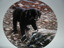 "Wedgwood Playful Puppies ""Friend Or Foe !"" labrador plate"