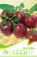 20 Original Pack Seeds Purple Green Stripe Tomato Seeds Tomatoes Organic C087