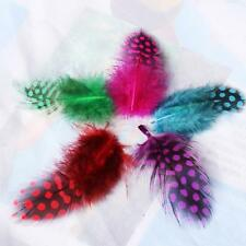 50pcs Dyed Guinea Fowl Feathers for DIY Hats Headwear Brooch Decor Mixed Color