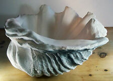 Extra Large  Giant Clam Shell Hand Sculptured Ornament 70CM WIDE Limited Period
