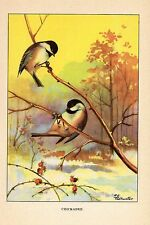 """1926 Vintage TODHUNTER BIRDS """"CHICKADEE"""" GORGEOUS 90 YEARS OLD Color Lithograph"""