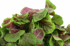 Organic Heirloom 3600 Seeds Amaranth Chinese Spinach Red Edible Vegetable