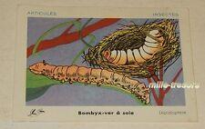Ancienne Image pour Bon Point : BOMBYX VER à SOIE - Edition L'OLIVIER