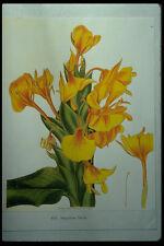 394068 Hedychium Flavum A4 Photo Print