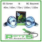 Reptile Neodymium Day Heat Lamp Bulb 40w 60w 75w 100w 150w ES Screw & BC Bayonet