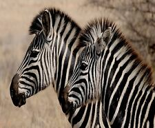 TWO ZEBRA HORSES COMPUTER MOUSE PAD 9x7