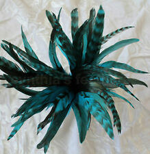 """50+ Turquoise 6-8"""" CHINCHILLA COQUE rooster Feathers, Millinery, Cynthia's"""