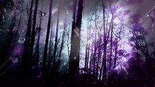 "STUNNING PURPLE ABSTRACT FOREST TREES Wall Art Large Canvas Print 20""x30"""