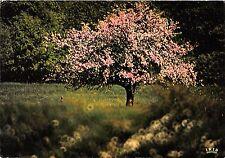 BR13194 Image du pintemps arbres tree  france