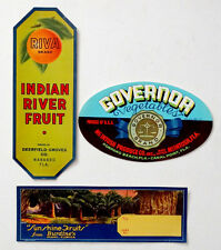 Vintage FLORIDA Orange Citrus Fruit CRATE LABEL Lot BURDINES of MIAMI & Wabasso