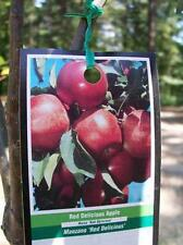4'-5' live Red Delicious Apple Fruit Tree Plant Trees Ship to all 50 States USA