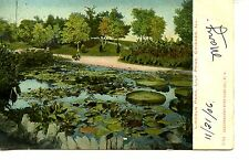 Lily Pads-Pond-Scenic View-Lincoln Park-Chicago-Illinois-1906 Vintage Postcard