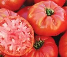 30 MORTGAGE LIFTER TOMATO SEEDS HEIRLOOM 2016 (non-gmo heirloom vegetable seed