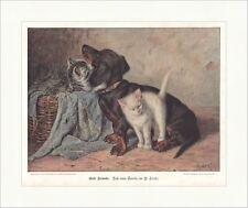 Gute Freunde Stocks Tiere Hund Dackel Katzen Korb coloriert Holzstich E 18410