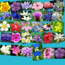 300 MIXED WILDFLOWER ALL PERENNIAL SEEDS FREE SHIPPING FRESH SEED