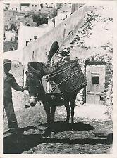 ÎLE DE SANTORIN c. 1950 - Enfant Âne Fira Grèce - DIV 9311