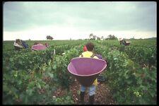 157051 Bordeaux Harvest France cabernet Sauvignon A4 Photo Print