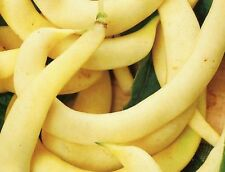 Anellino Giallo- Yellow Pole Bean Seeds- 20+ Seeds          $1.69 Max. Shipping