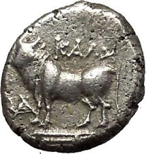 KALCHEDON in BITHYNIA 357BC Cow Authentic Ancient Silver Greek Coin i53905