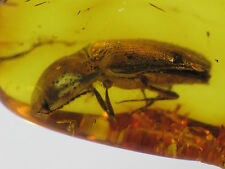 6mm BEETLE Genuine Gemstone Real Baltic Amber Fossil Insect Inclusion (0589)